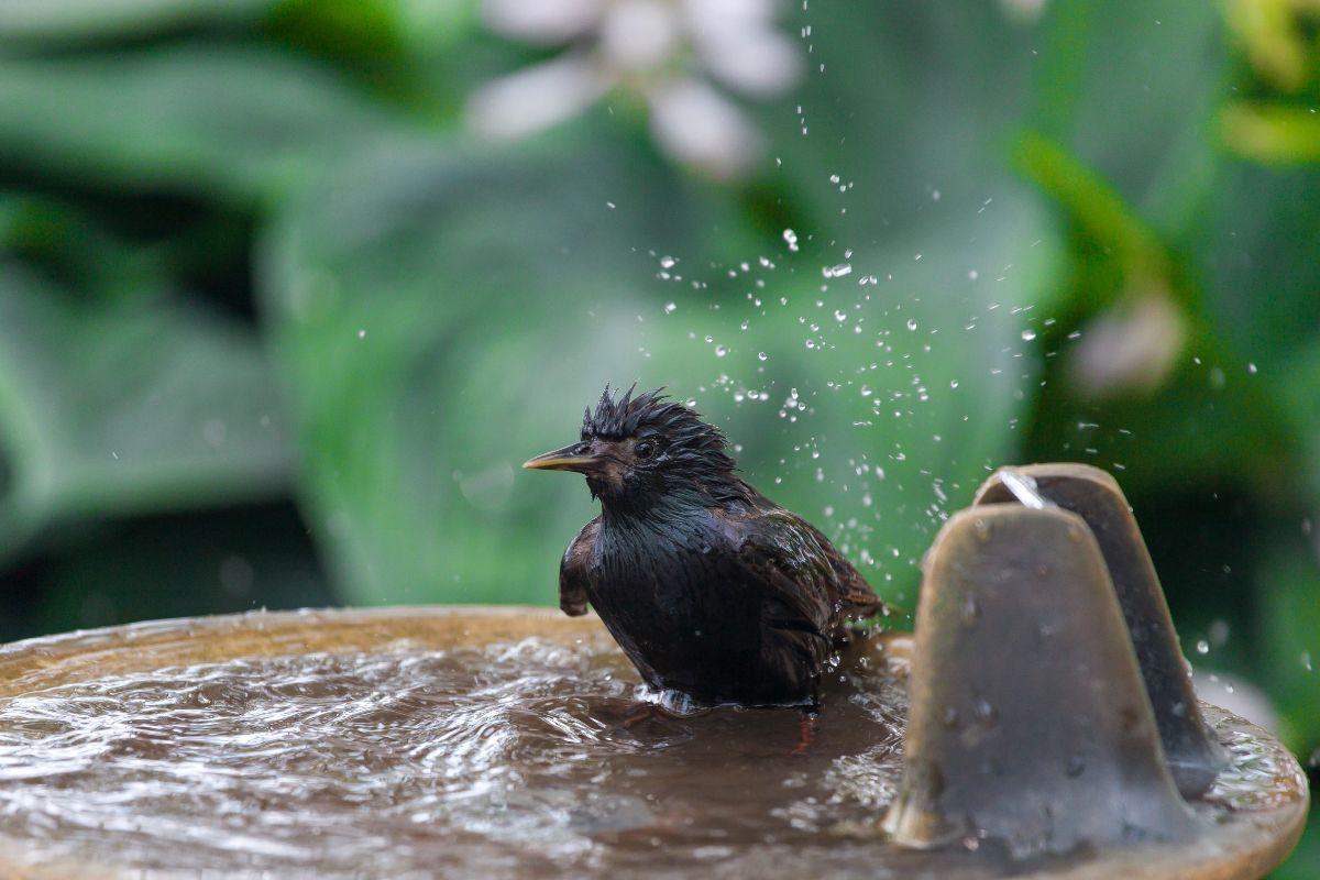 best solar powered bird bath fountain